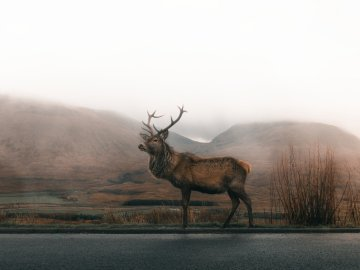 An image of Galloway Deer Park at Loch Ken Eco Bothies self-catering accommodation eco retreats in G